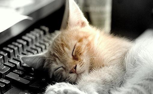 Koty, kotki, kociaki: Kocie mieszkanie