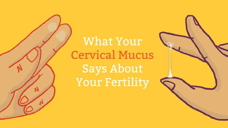 What does your cervical mucus say about your fertility? A lot, actually! See our cervical mucus chart to know exactly when to try and get pregnant (or not).