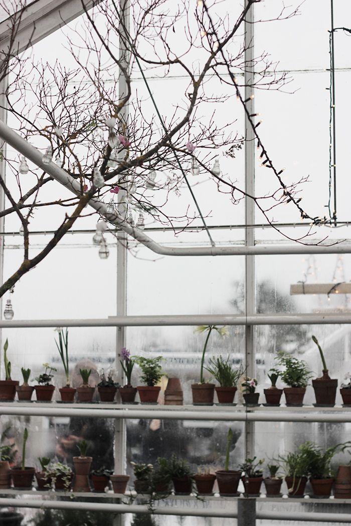 a winter greenhouse scene