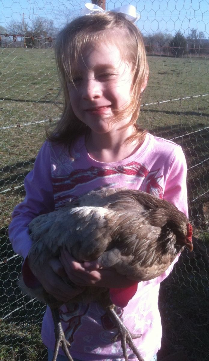 8 Things You Need to Know about Raising Chickens