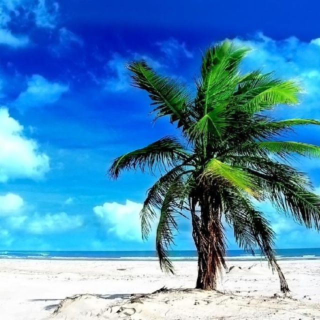 One lonely palm... Like me