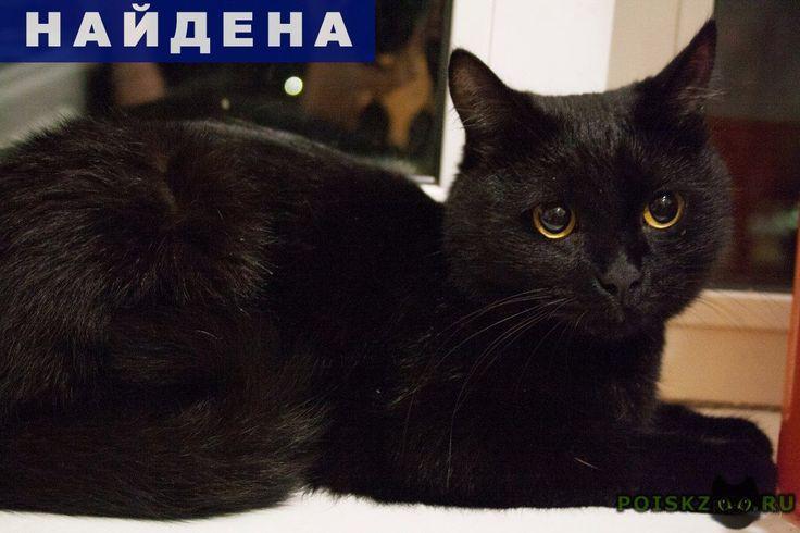 Найдена кошка кот( ) черного цвета г.Пермь http://poiskzoo.ru/board/read26055.html  POISKZOO.RU/26055 Нашелся кот(кошка) черного цвета, отличительная черты белое пятно в области паха, ошейник. В районе пермской ярмарки, обидает под окнами дома патриса лумумбы ... переодически мяукает.   РЕПОСТ! @POISKZOO2 #POISKZOO.RU #Найдена #кошка #Найдена_кошка #НайденаКошка #Пермь