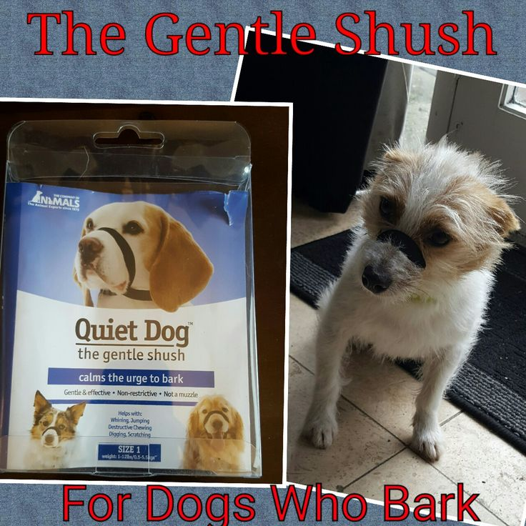 Chatty Dogs try the Gentle Shush
