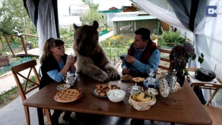 Уже 20 лет медведь живёт в обычной семье. Только посмотрите что он вытворяет! — SmilePub