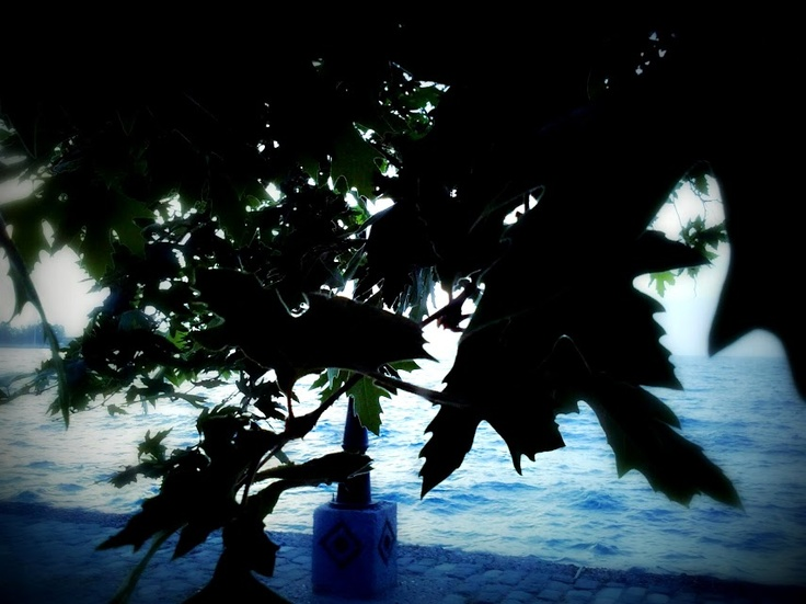 Sea over the tree