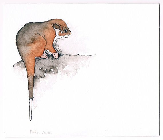 Ringtail Possum Original Ink and Watercolor Card, Free Shipping