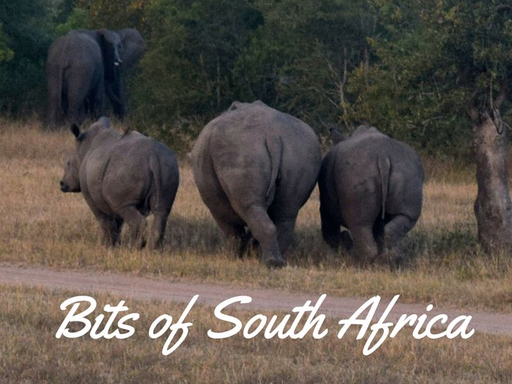 My favorite bits of South Africa