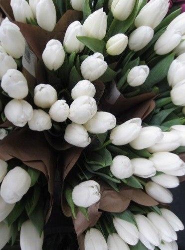 Tulip bouquet - photo