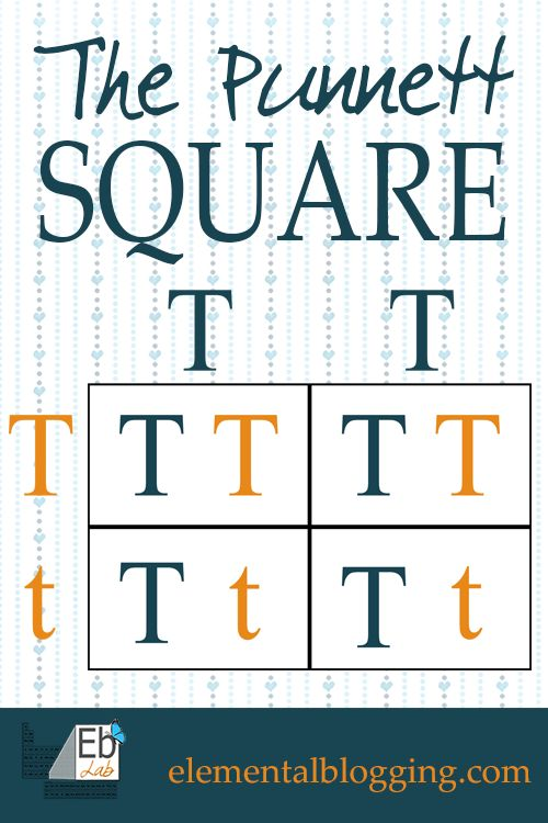 The Punnett Square {FREE Printable and Science Activity Included from Elemental Blogging}