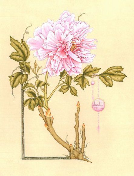 Hülya Aziz-Şakayık, 2009 #hulyaaziz #flower #drawing #miniature #stylized #tezhip #stilizecicek #illumination #art