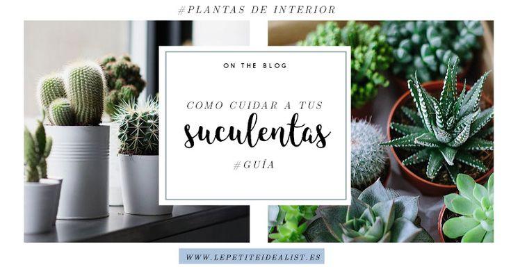 Guía para cuidar de tus suculentas: cactus y plantas crasas. Todo lo básico que necesitas conocer para su buen crecimiento <3