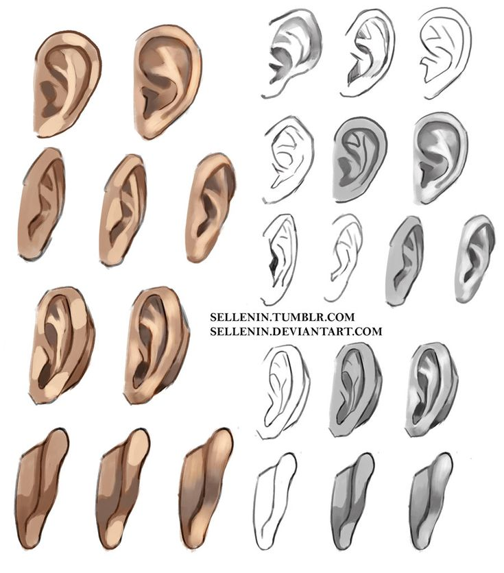 Ears reference by Sellenin.deviantart.com on @DeviantArt