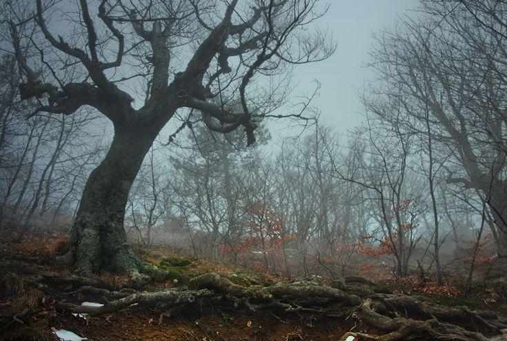Фотография Туманный лес. Автор Олег Кругляк.