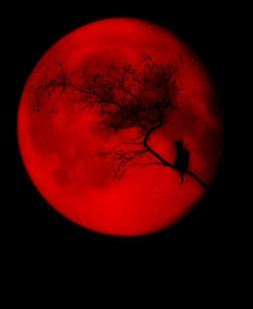 red moon quotes goodreads - photo #13