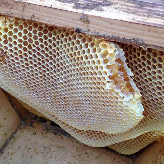 Preparing Honey Bees For Winter: Preparing a Top Bar Hive for winter.