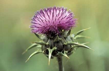 12 plante si nutrienti anti-imbatranire
