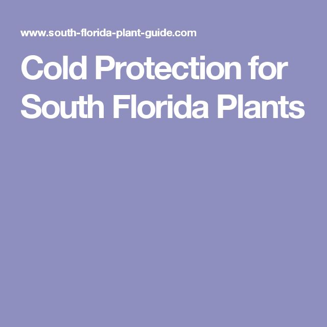 Cold Protection for South Florida Plants