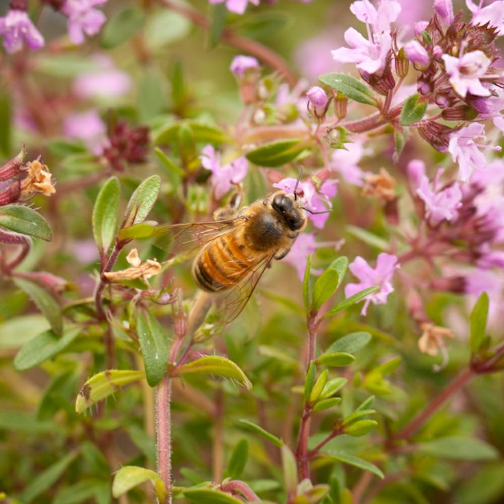 California Native Plant Landscape Design Examples: 11 Best Favorite Perennials Images On Pinterest