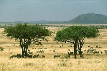 serengeti01.jpg (350×233)