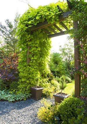 What used to be an open, grassy yard has been divided into garden rooms, making the small corner lot appear larger. A purple smoke tree and burgundy barberry flank golden hops draping over the trellis dividing front and side gardens.