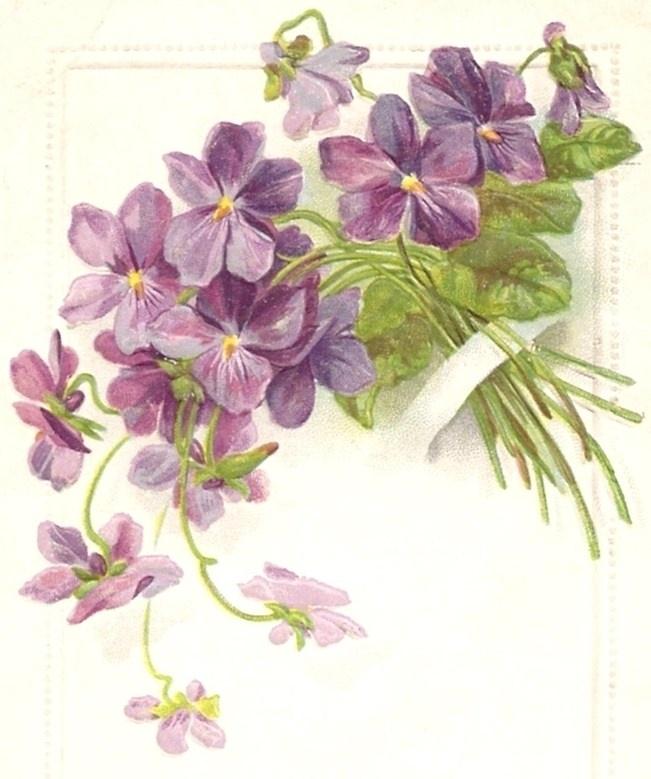 violets                                                                                                                                                     More