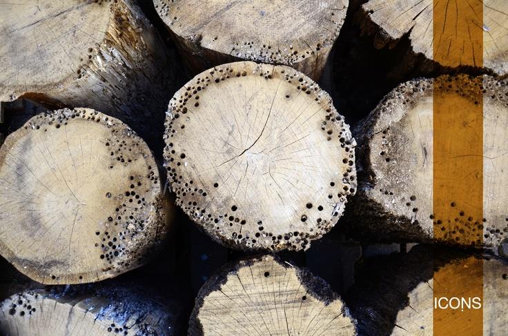 The #special #wood of our #products: the #Oak #wood of the venetian #briccola.  / Il #legno #speciale dei nostri prodotti: #legno in #rovere di #briccola di #Venezia. #iconsfurniture