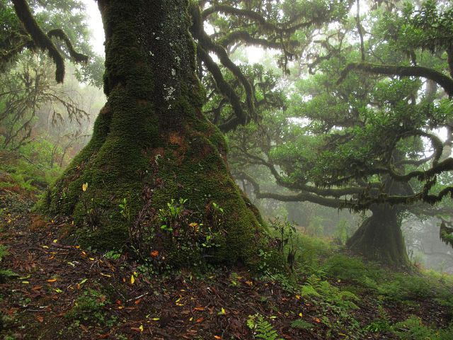 Mystisches Grün: Der Feenwald auf Madeira – Waldspaziergang.org *Laurisilva*