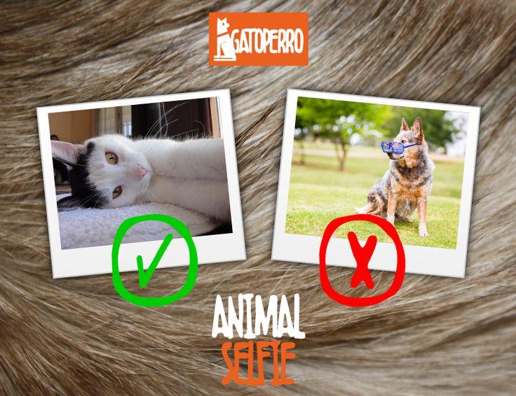 """Gráficas FaceBook """"Animal Selfie"""" - Fundación GatoPerro Los Andes"""