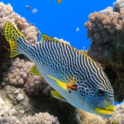 Great Barrier Reef Tours. Want to see the beautiful Great Barrier Reef? Contact the team at Wot Reef to find the right tour for you http://www.wot-reef.com/great-barrier-reef-tours/great-barrier-reef-tours