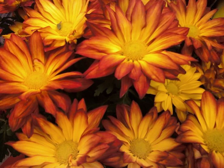 17 Best Images About Fall Flowers On Pinterest Floral