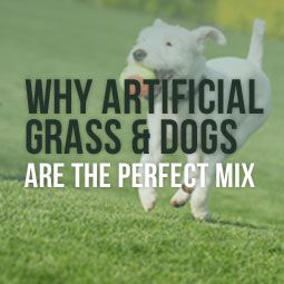 The main benefits of artificial turf are primarily for humans but when it comes to your pet they more than likely will never know the difference.