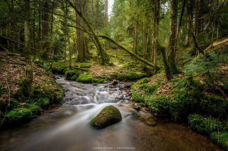 Petit ruisseau au saut de la bourrique à Gérardmer #vosges #gérardmer #landscapephotography #nature #photographie