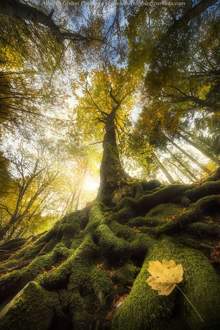 The goodbye of a leaf by Alberto Ghizzi Panizza ~ Badia Pratglia, Italy**
