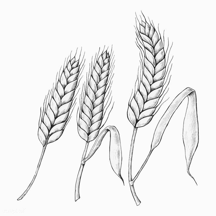 распечатать картинки пшеницы близнецов
