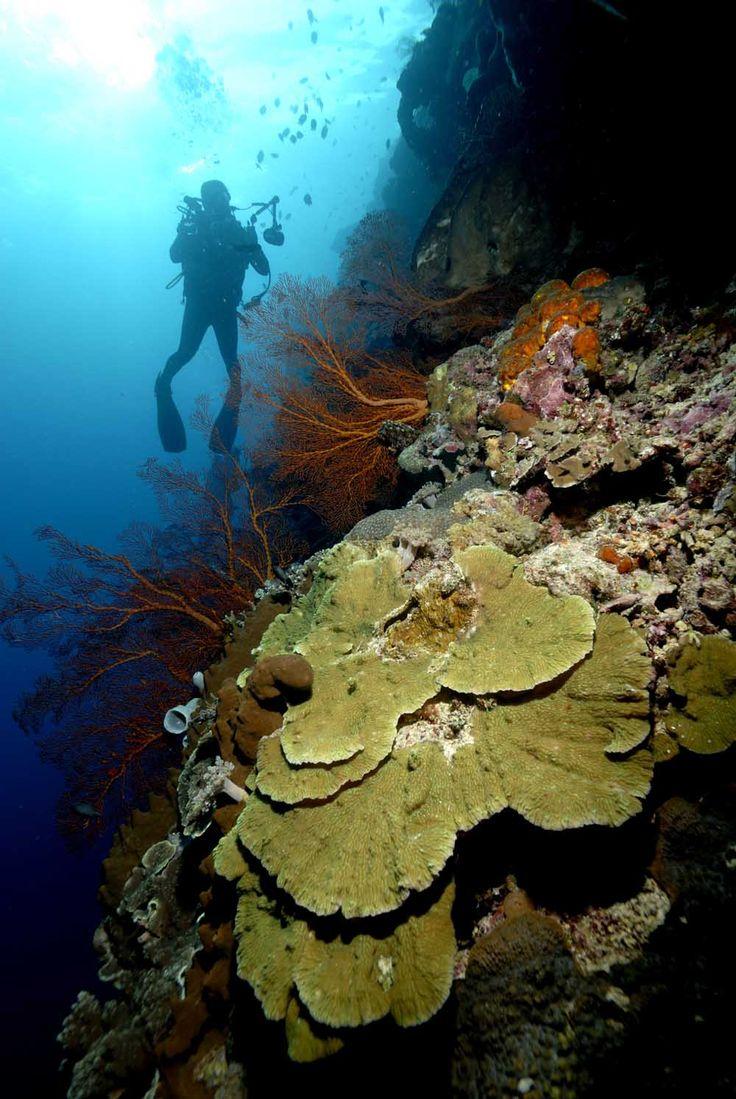 Bunaken Sulawesi Indonesia