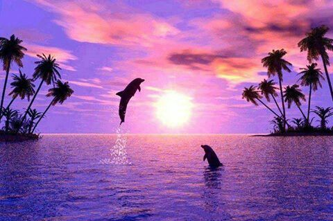Dolphins with a purple sunset