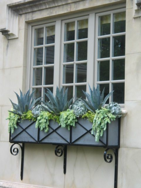 succulent window box SANCTUARY SUCCULENTS Design & Consulting Monarch Beach, Ca 619 888-1500