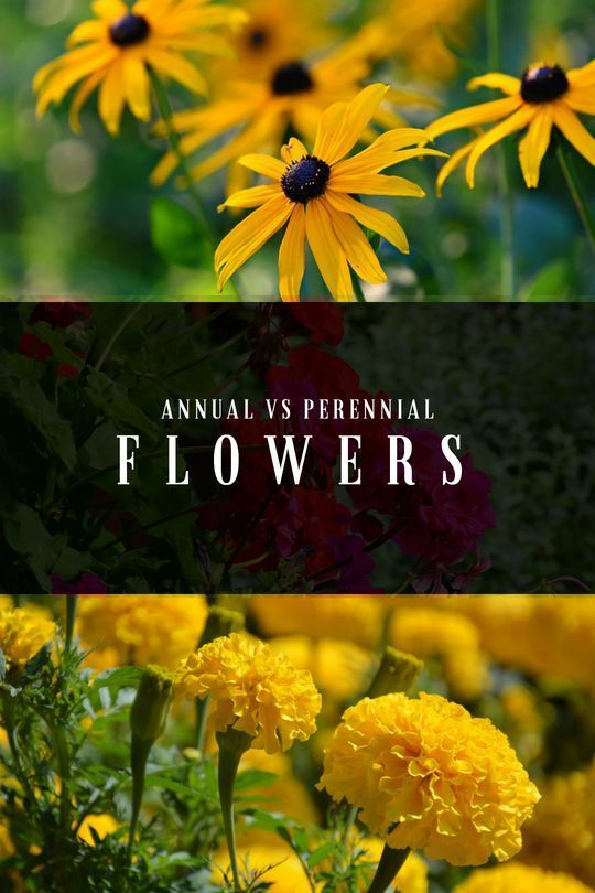 Annuals vs Perennials: What is the Difference