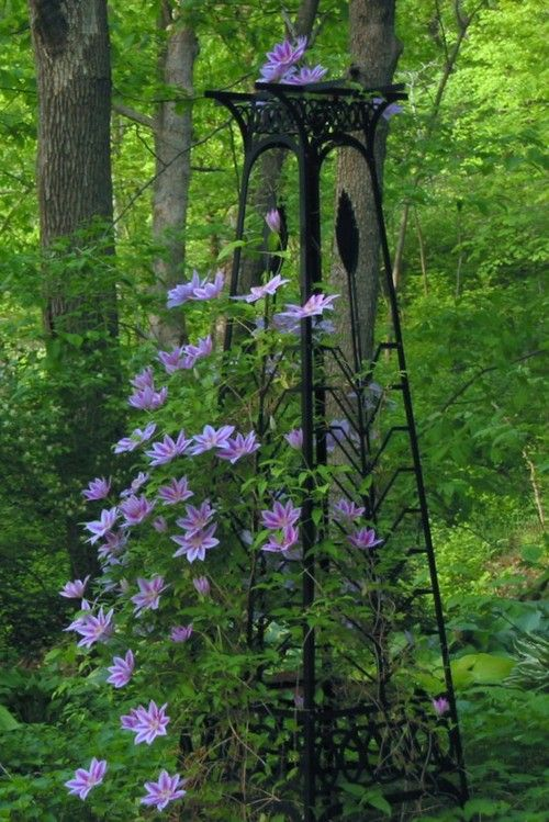 Lovely Obelisk With Clematis Surprisingly Growing In What