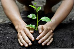 What are Environmental Ethics?