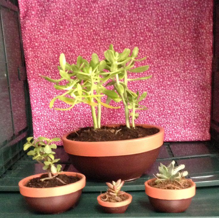 Macetas decoradas con plantas. Pedidos: ventanaverdemex@gmail.com