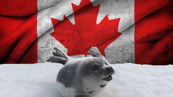 Pétition · Justin Trudeau: STOP THE CANADA COMMERCIAL SEAL HUNT: Don't Seal Their Fate. · Change.org