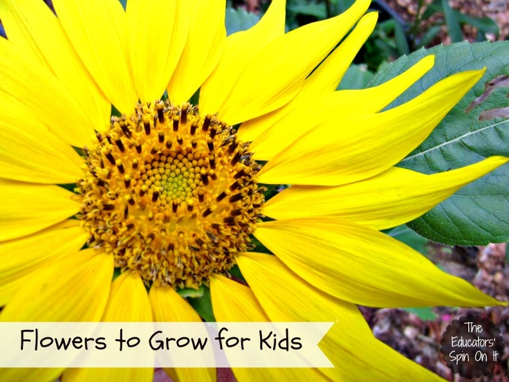Tips for which types of Flowers to Grow for Kids to enjoy.