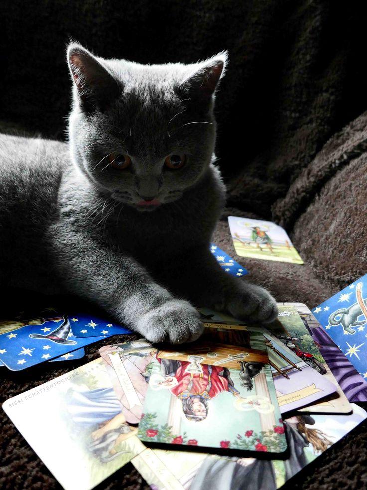 Cats are true tarot professionals