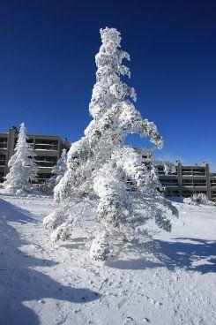 Condo Rental Beech Mountain - Beech Mountain NC Hotels