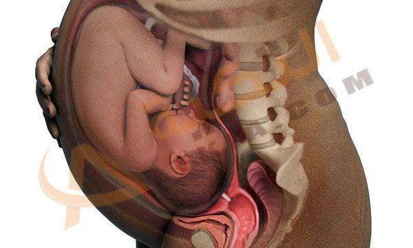 الحمل هو حلم كل امرأة وكل فتاة ويجب توفير غذاء المرأة الحامل دائما وعندما تكون المرأة حامل يجب عليها أن تعتني بصحتها جيدا حتي تعتني بصحة ج التكية Baby