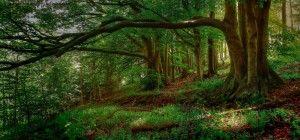 Πώς ξυπνάει η ζωή κάθε άνοιξη στο δάσος, σε ένα υπέροχο time-lapse βίντεο