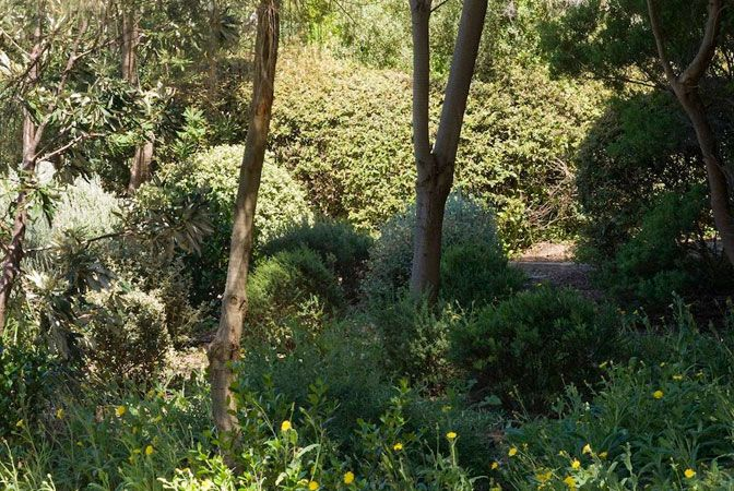 1205 best images about australian native gardens on pinterest