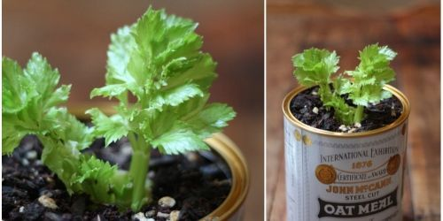 By Kim Robson:  Did you know that certain vegetables can be regrown from their own scraps? It's su...
