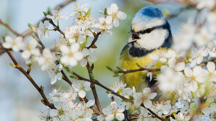 Julian Stratenschulte/AP - Pássaro fica entre as flores para escapar das altas temperaturas de Sehnde, Norte da Alemanha. Foto: Julian Stratenschulte/AP
